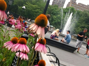 Lively conversations in Washington Square